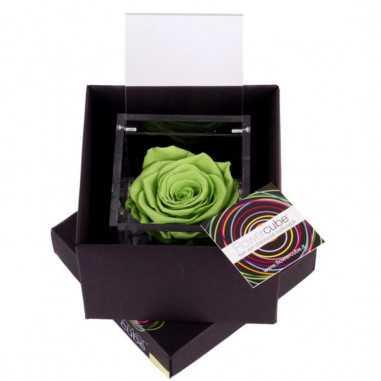 FlowerCube Verde 8x8 cm shop online