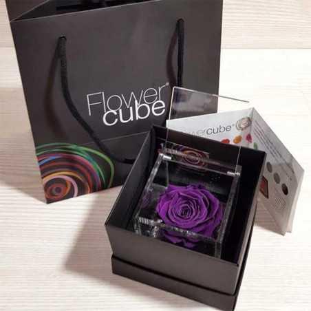 FlowerCube Viola 8x8 cm shop online