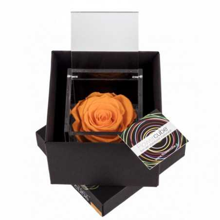 FlowerCube Arancio 8x8 cm shop online