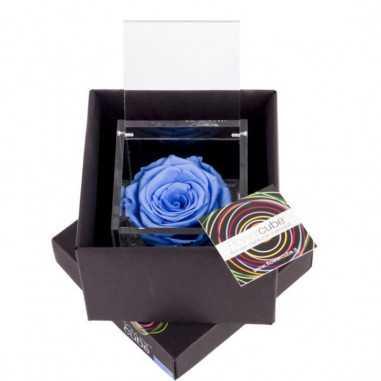 FlowerCube Azzurro 10x10 cm shop online