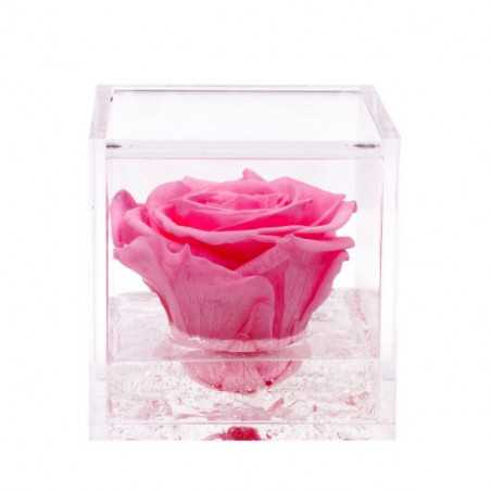 FlowerCube Rosa 8x8 cm shop online