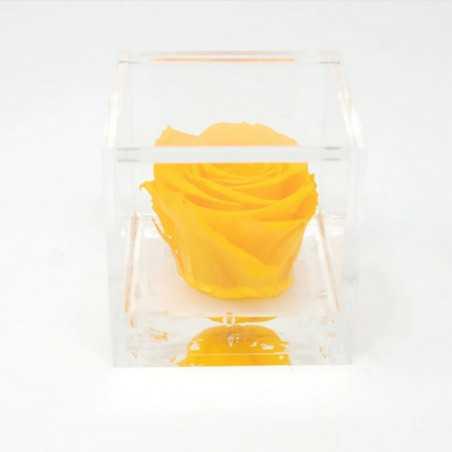 FlowerCube Giallo 6x6 cm shop online