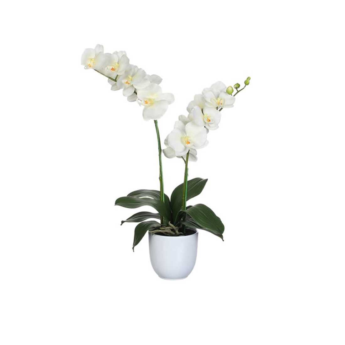 Orchidea Phalaenopsis Artificiale shop online