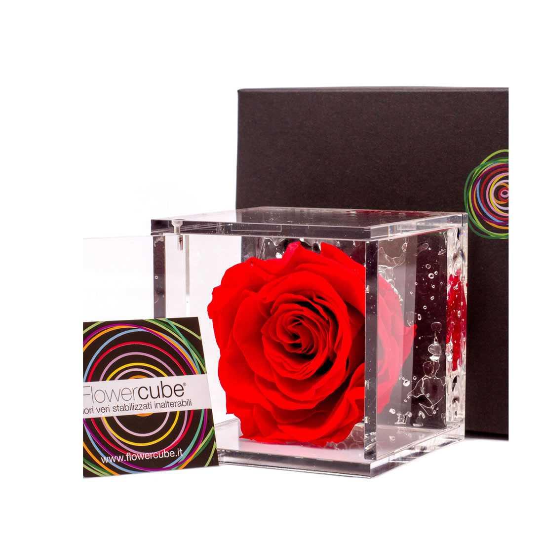 FlowerCube 10x10 cm shop online